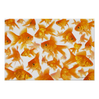 Background Showing a Large Group of Goldfish Poster