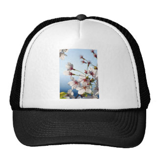 Backlit Cherry Blossoms Hats