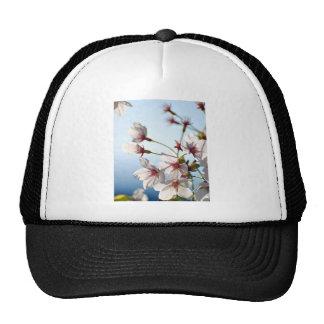 Backlit Cherry Blossoms Mesh Hats