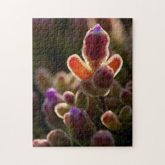 Backlit Colorful Succulent Flower Bud With Rim Puzzles