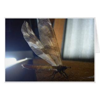 Backlit Dragonfly Greeting Cards