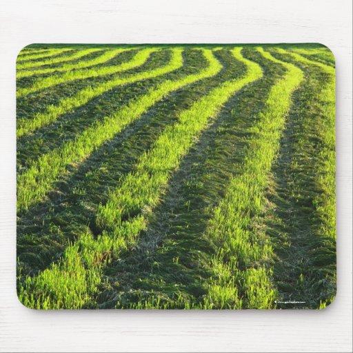 Backlit farmland mouse pad