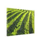Backlit farmland stretched canvas print