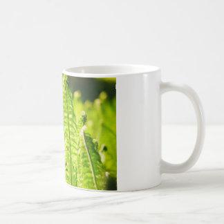 Backlit Fern Coffee Mug