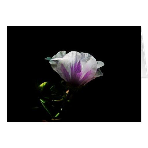 Backlit Flowers Greeting Cards