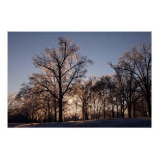 Backlit icy trees poster