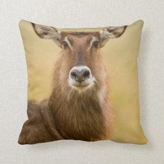 Backlit Portrait Of Female Defassas Waterbuck Throw Pillow