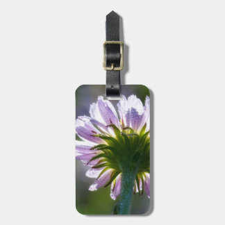 Backlit Purple Wildflower With Dewdrops Tags For Bags