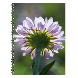 Backlit Purple Wildflower With Dewdrops Spiral Notebook
