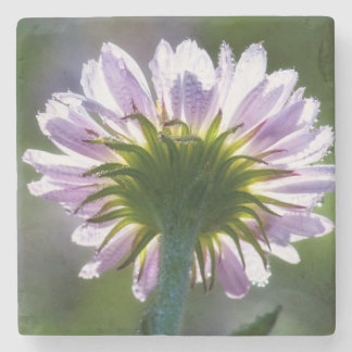 Backlit Purple Wildflower With Dewdrops Stone Coaster
