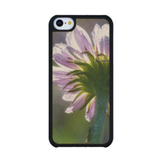 Backlit Purple Wildflower With Dewdrops Carved® Maple iPhone 5C Slim Case