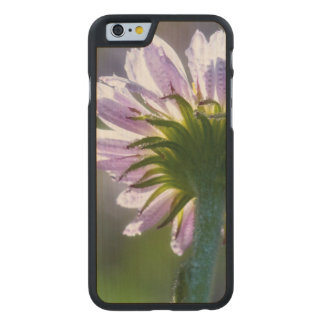 Backlit Purple Wildflower With Dewdrops Carved® Maple iPhone 6 Case