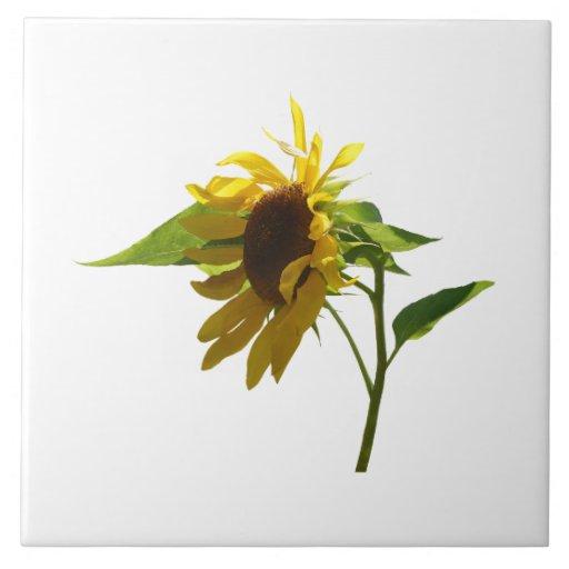 Backlit Sunflower Ceramic Tile