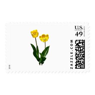 Backlit Yellow Tulips Postage
