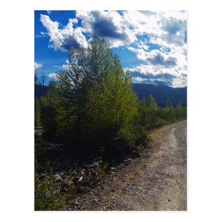 Backroad to Bowman lake Glacier National Park Postcard