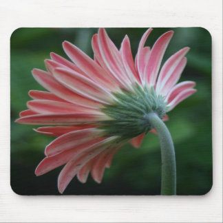 Backside of pink gerber daisy colorful mousepad