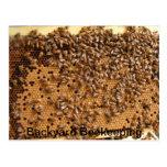 Backyard Beekeeping Postcard