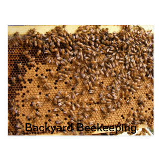 Backyard Beekeeping Postcard