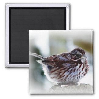 Backyard Bird - Siskin or Swallow 2 Inch Square Magnet