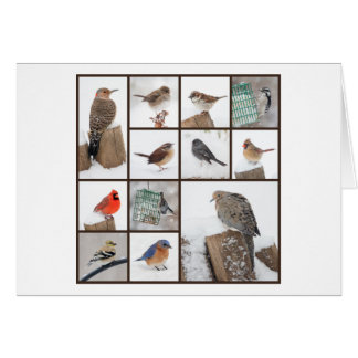Backyard Birds in Snow Card