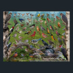 """Backyard Birds of Michigan Poster<br><div class=""""desc"""">Backyard Birds of Michigan Id Poster.   This poster represents most of the common backyard and feeder birds found in the State of Michigan.  A great gift idea for the nature lover and anyone that likes to feed birds in their backyard</div>"""