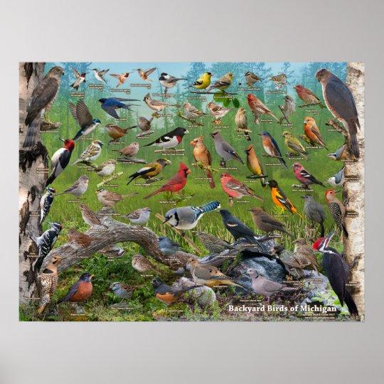 Backyard Birds Of Michigan Poster