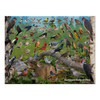 Backyard Birds of Ohio Poster
