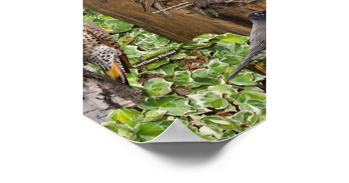Backyard Birds of the East Poster | Zazzle.com