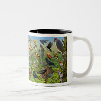 Backyard Birds Of the West Two-Tone Coffee Mug
