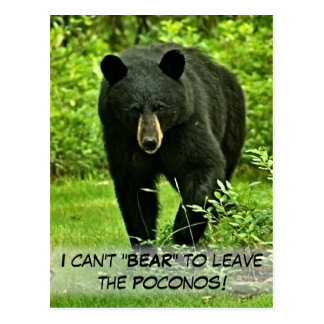 "Backyard Black Bear ""Can't Bear to Leave!"" Postcard"