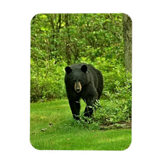 Backyard Black Bear Rectangle Magnets