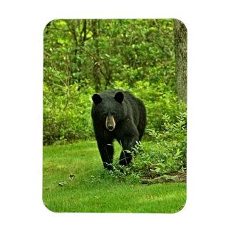 Backyard Black Bear Rectangular Photo Magnet