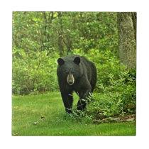 Backyard Black Bear Tile