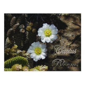 Backyard Cactus Blooms (Pine Cone Cactus) Postcard