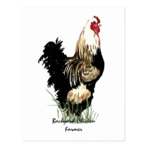 Backyard Chicken Farmer with Rooster Design Postcard