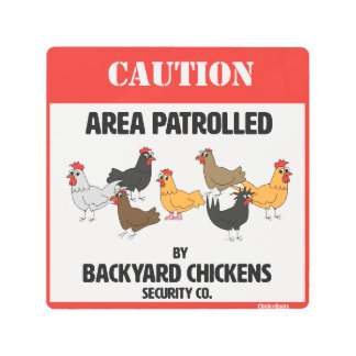 Backyard Chickens Security Company Metal Print