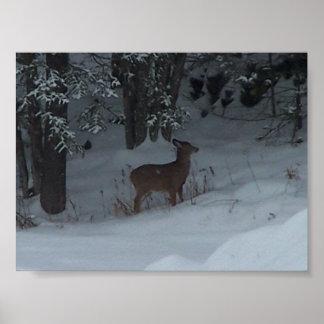 Backyard Deer Poster