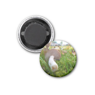 Backyard Fungi (Mushroom & Ant) 1 Inch Round Magnet