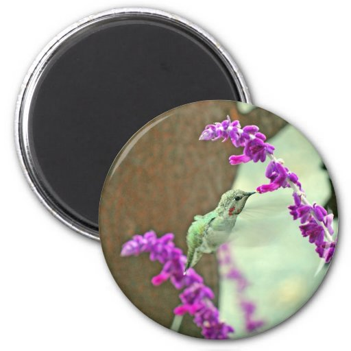Backyard Hummingbird III 2 Inch Round Magnet