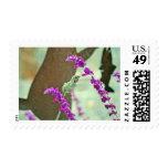 Backyard Hummingbird III Postage Stamps