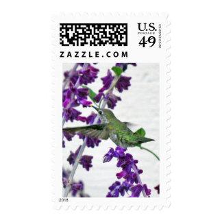 Backyard Hummingbird Postage Stamp