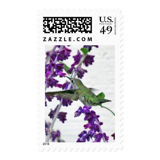 Backyard Hummingbird Postage Stamps