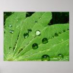 Backyard Pics Dew on a Leaf Posters