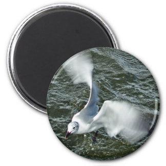 Backyard Seagull 2 Inch Round Magnet