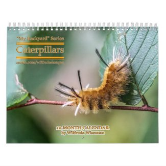 Backyard Series Caterpillars Calendar