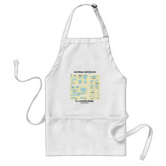 Bacterial Morphology All Located Inside (Bacteria) Adult Apron