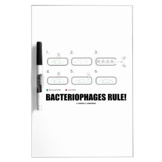 Bacteriophages Rule! (Bacteria Virus DNA) Dry-Erase Boards