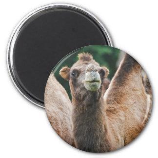 Bactrian Camel Magnet