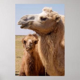 Bactrian Camel Portrait Poster