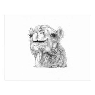 Bactrian Camel Postcard